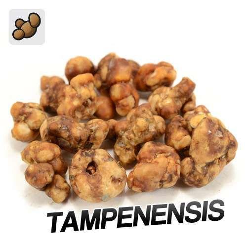 Tampanensis Truffes (15 grammes)