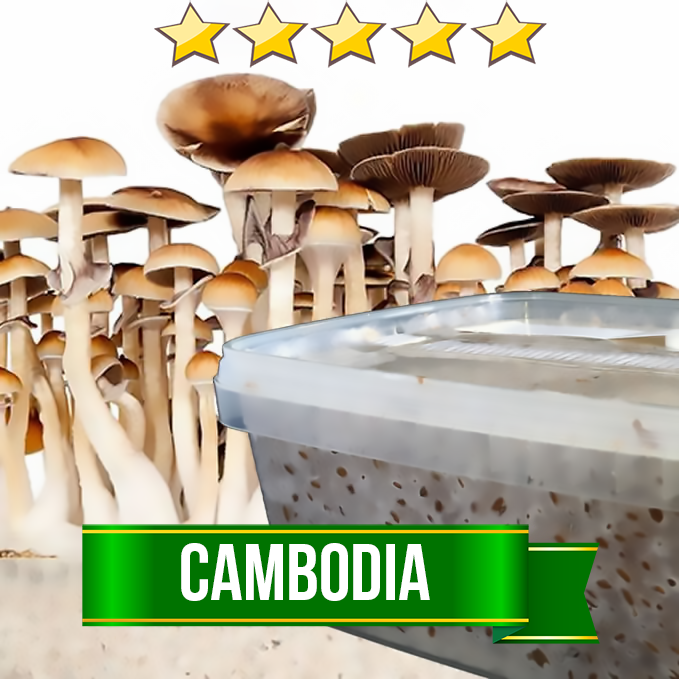 Cambodia Magic Mushroom Grow kit - 1200cc