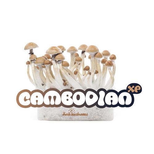 100% MYCELIUM Cambodian - Mushroom growkit 1200cc
