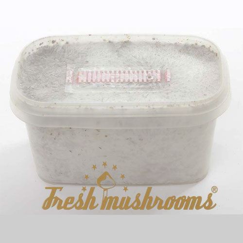 Mexican Mini | Freshmushrooms grow kit