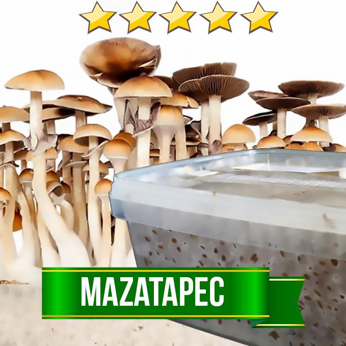 Mazatapec Magic Mushroom Grow Kit - 1200cc
