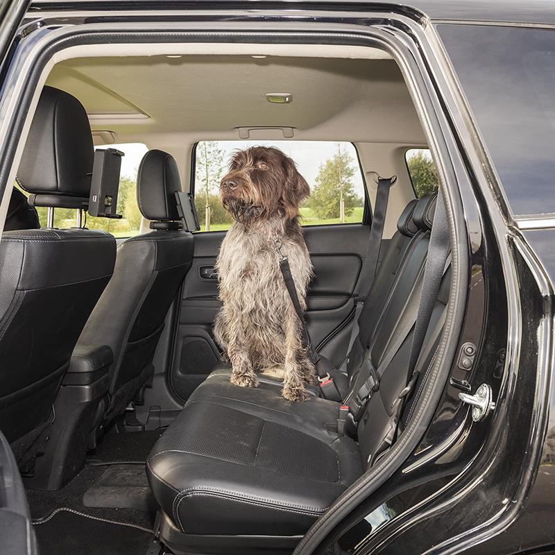 Hondenriem voor autogordel
