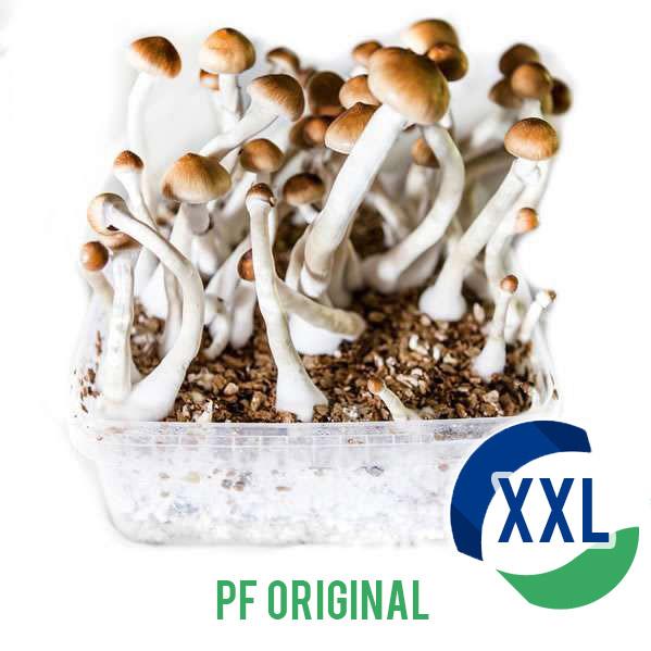 PF Original XL - 2100cc Paddo kweekset