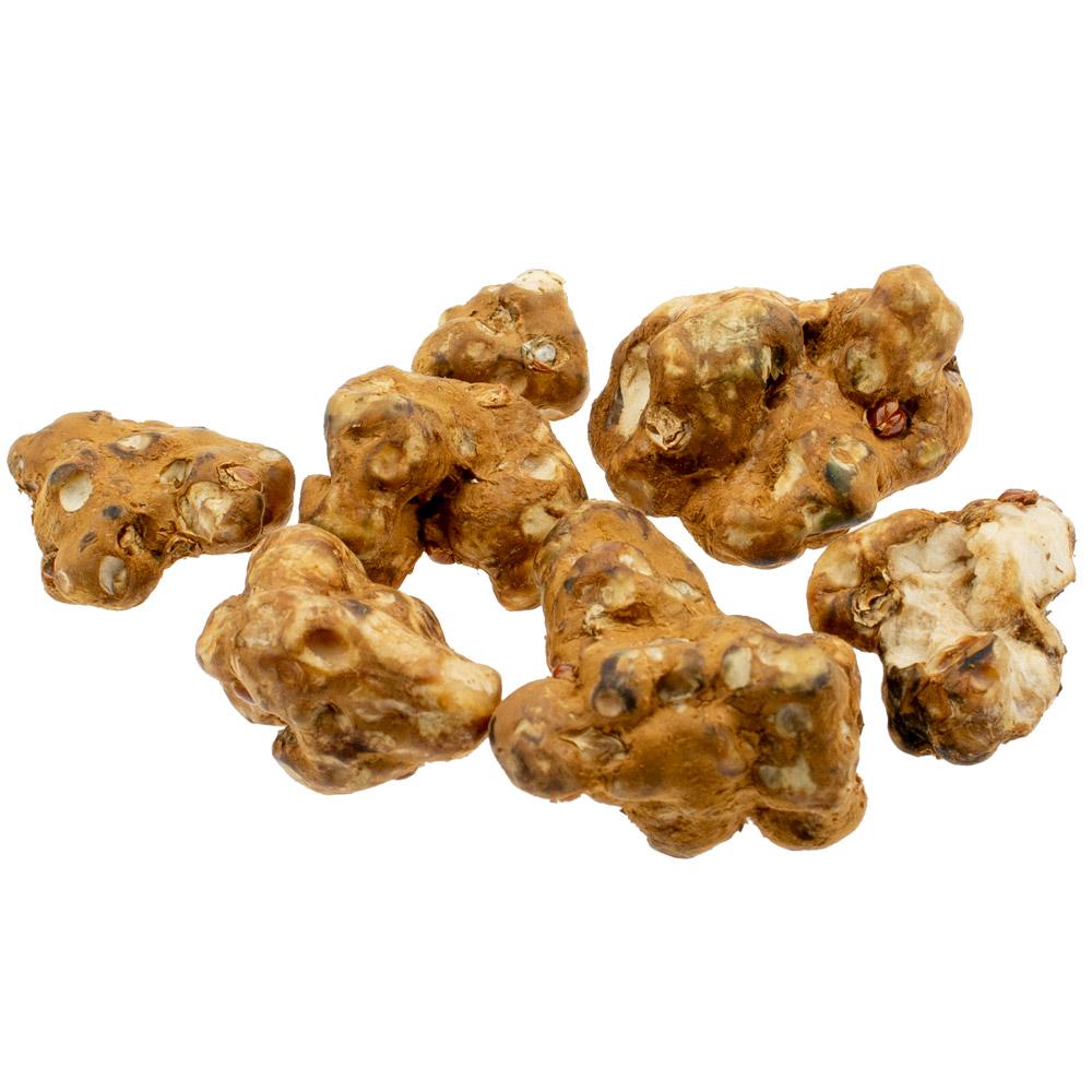 Tampanensis 15 gram - Magic Truffles